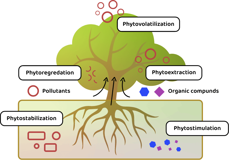 Phy2climate_infographic_home_01