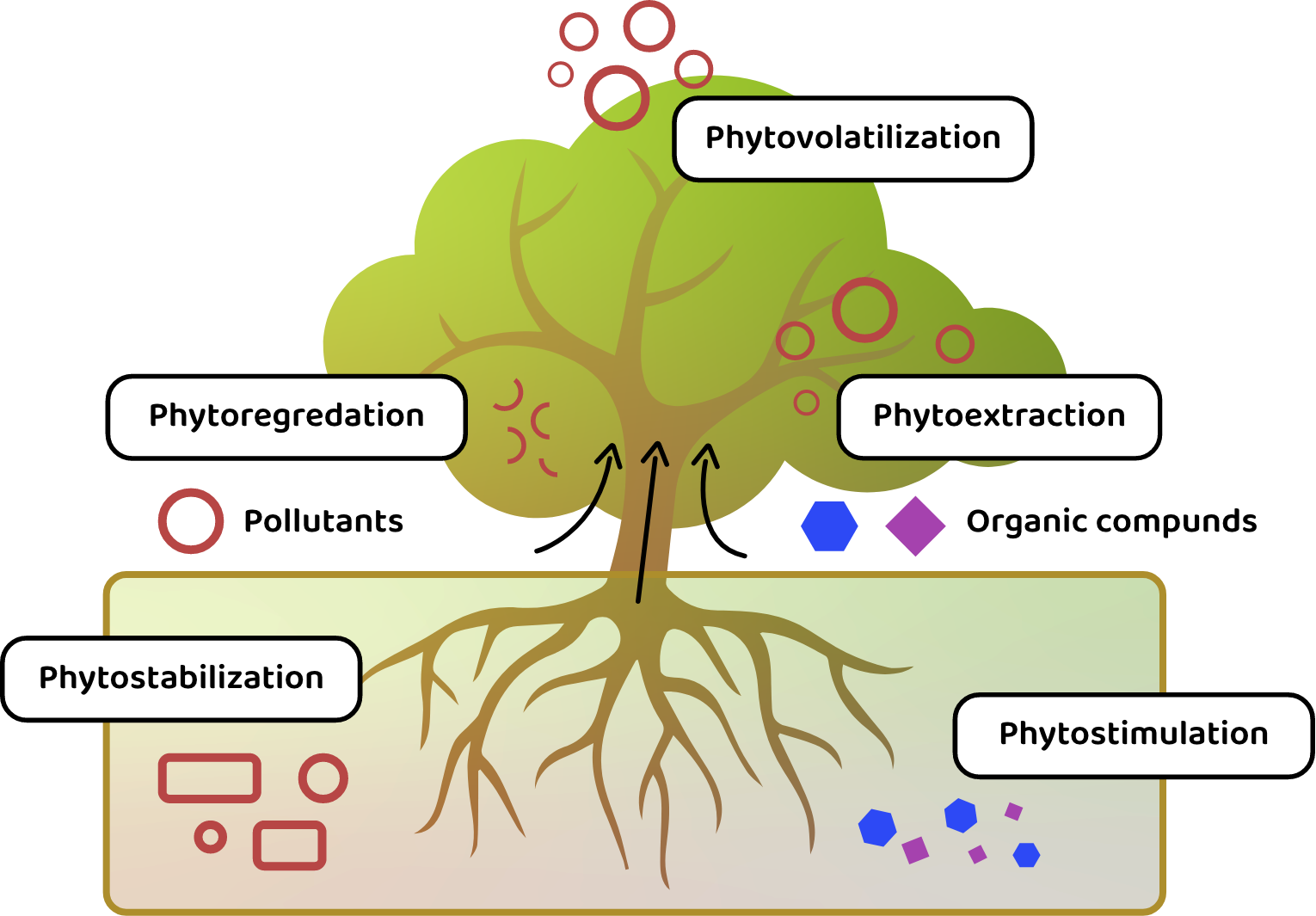 P2C_home_phytoremediation_infographic