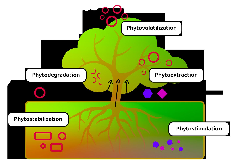P2C_home_phytoremediation_infographic_OK